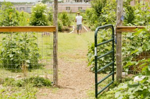 The gardens at the Whole Life Learning Center. Photo Credit- Woody Welch